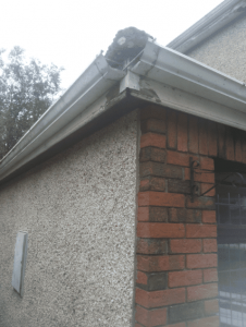 Gutter Replacement in Dublin